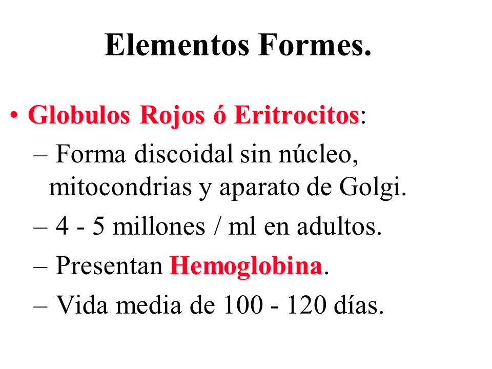 Elementos Formes. Globulos Rojos ó Eritrocitos: