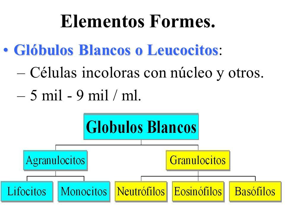 Elementos Formes. Glóbulos Blancos o Leucocitos: