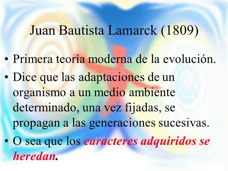 Juan Bautista Lamarck (1809)