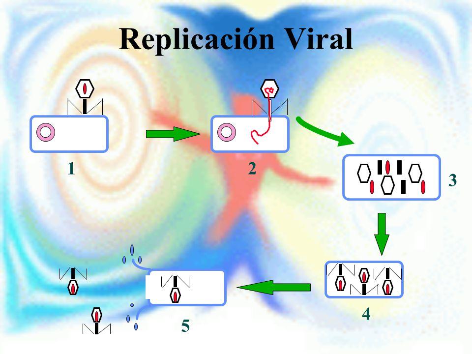 Replicación Viral 1 2 3 4 5