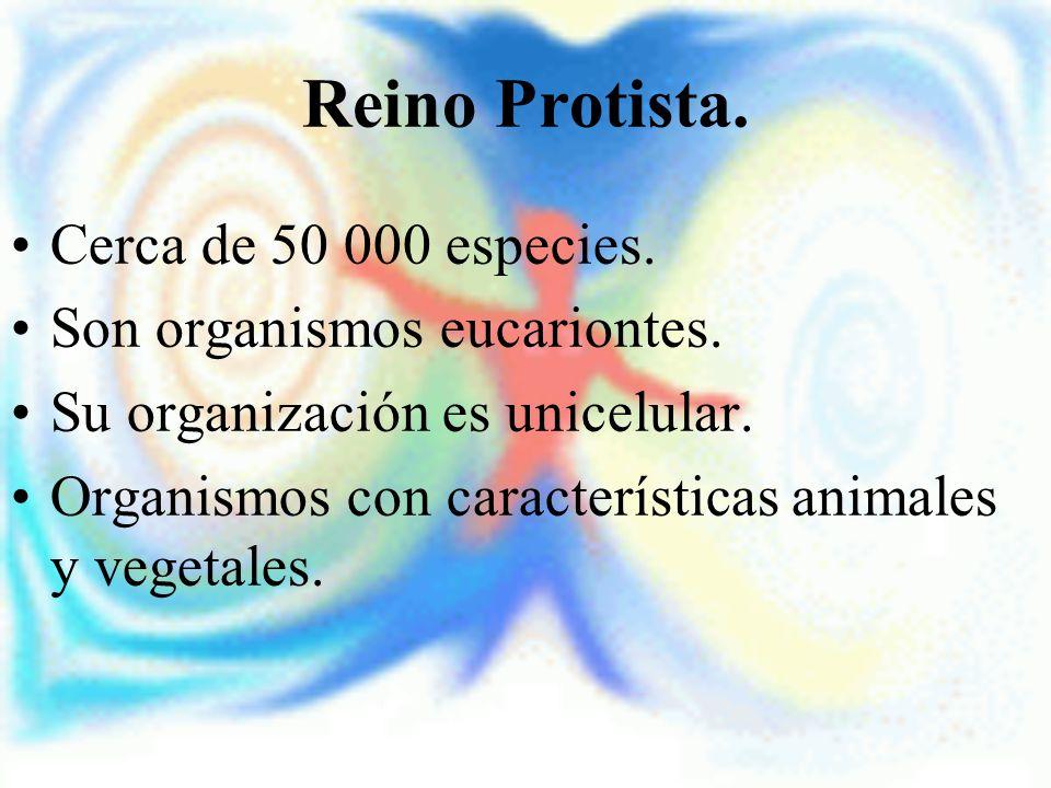 Reino Protista. Cerca de 50 000 especies. Son organismos eucariontes.