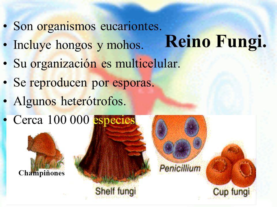 Reino Fungi. Son organismos eucariontes. Incluye hongos y mohos.