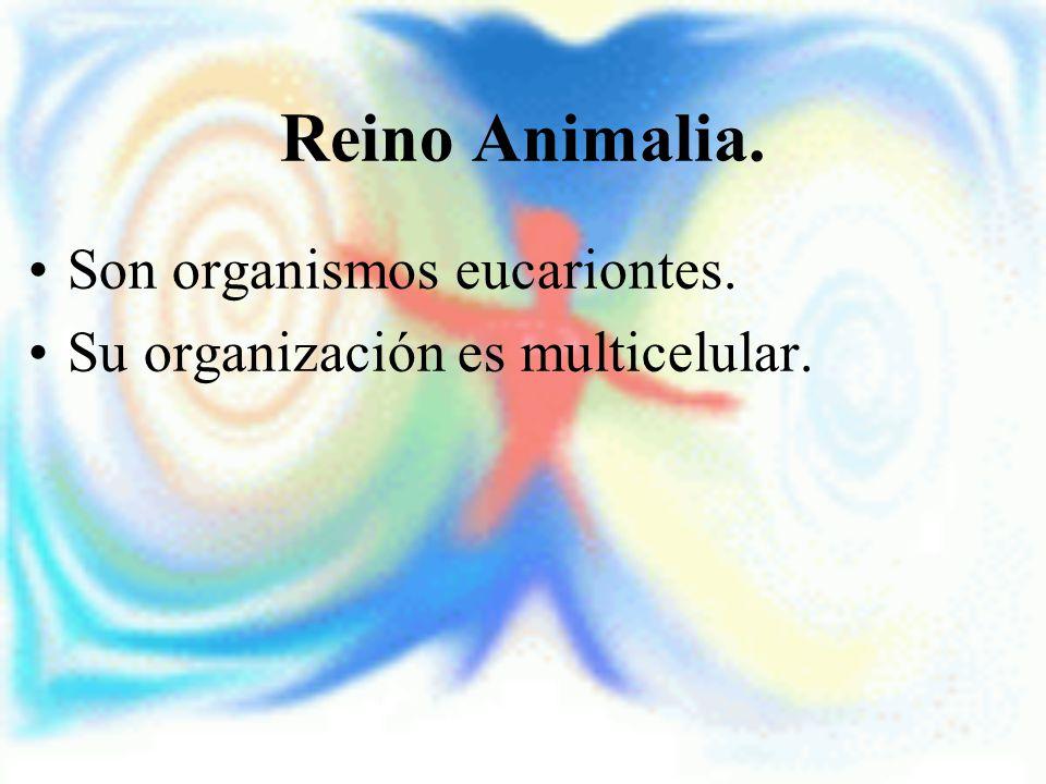 Reino Animalia. Son organismos eucariontes.