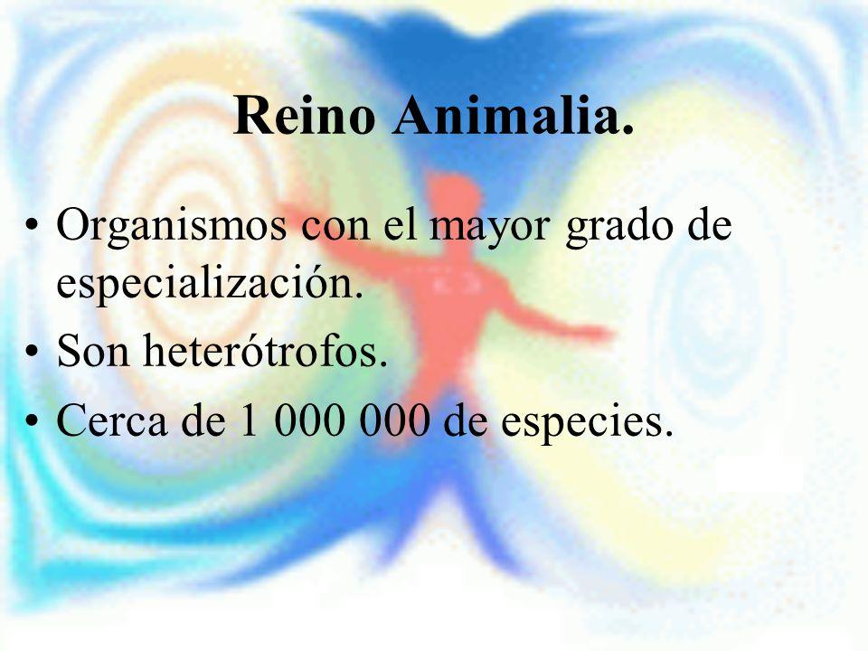 Reino Animalia. Organismos con el mayor grado de especialización.