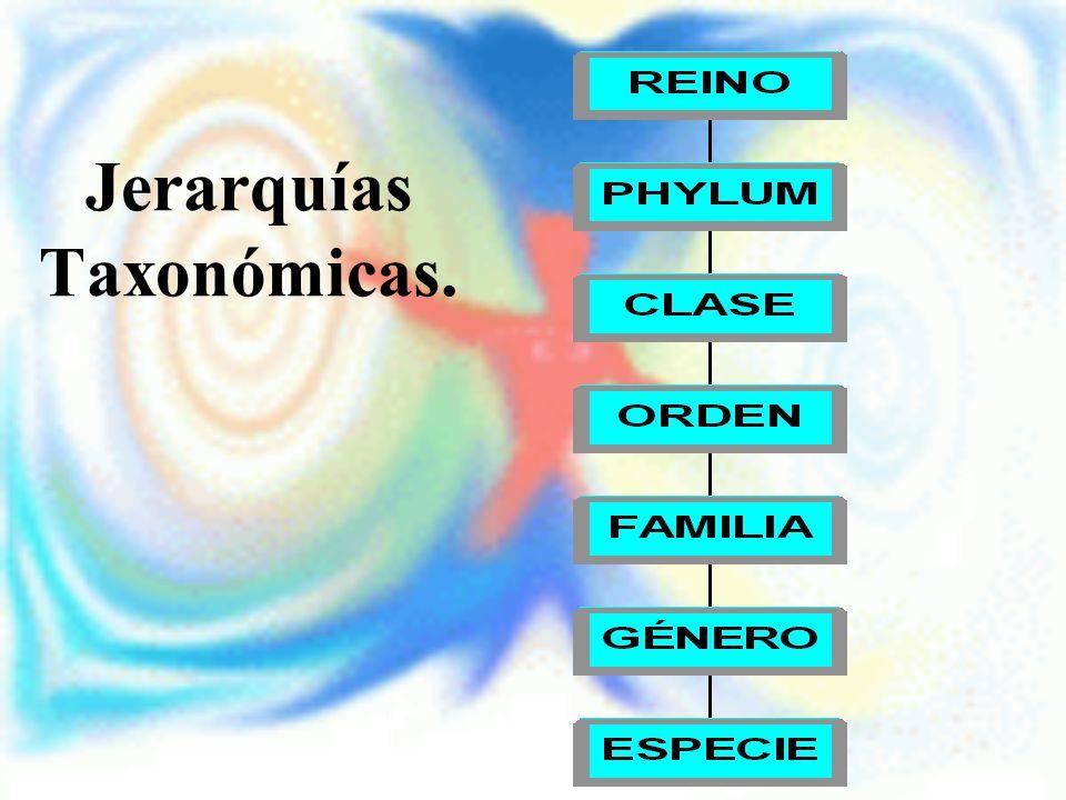Jerarquías Taxonómicas.
