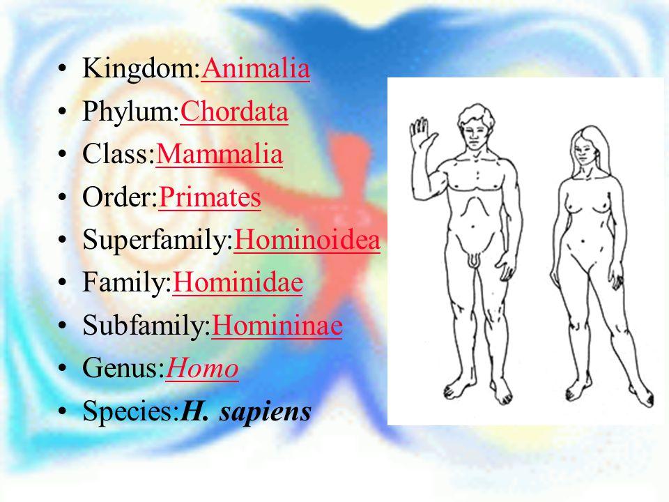 Kingdom:Animalia Phylum:Chordata. Class:Mammalia. Order:Primates. Superfamily:Hominoidea. Family:Hominidae.