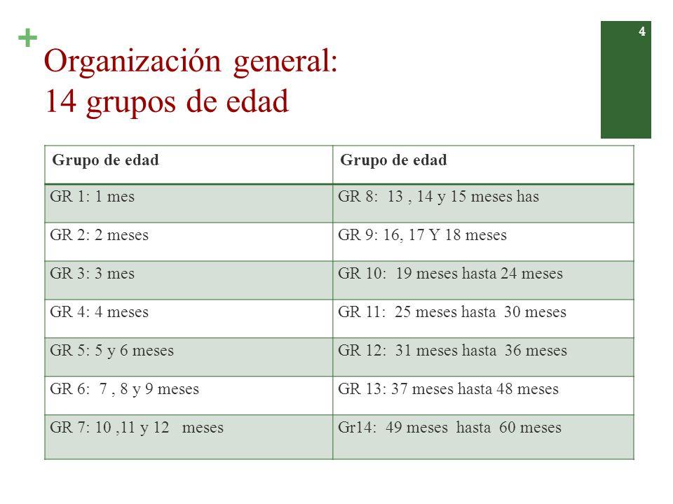 Organización general: 14 grupos de edad