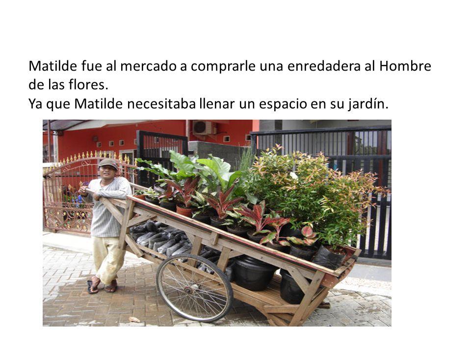 Matilde fue al mercado a comprarle una enredadera al Hombre de las flores.