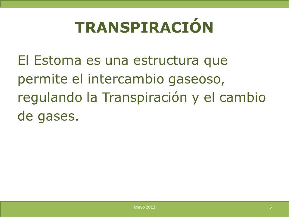 TRANSPIRACIÓN El Estoma es una estructura que permite el intercambio gaseoso, regulando la Transpiración y el cambio de gases.