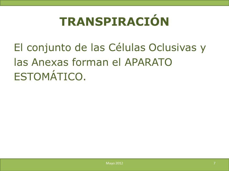 TRANSPIRACIÓN El conjunto de las Células Oclusivas y las Anexas forman el APARATO ESTOMÁTICO.