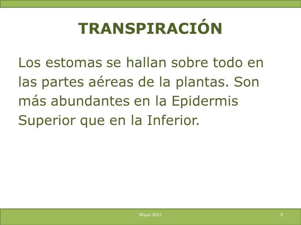 TRANSPIRACIÓN Los estomas se hallan sobre todo en las partes aéreas de la plantas. Son más abundantes en la Epidermis Superior que en la Inferior.
