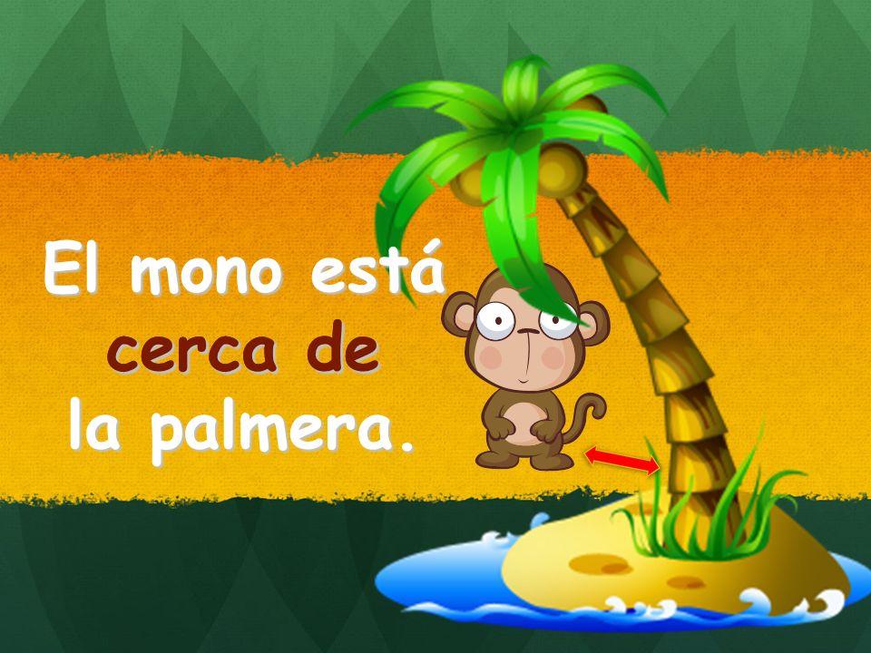 El mono está cerca de la palmera. cerca de