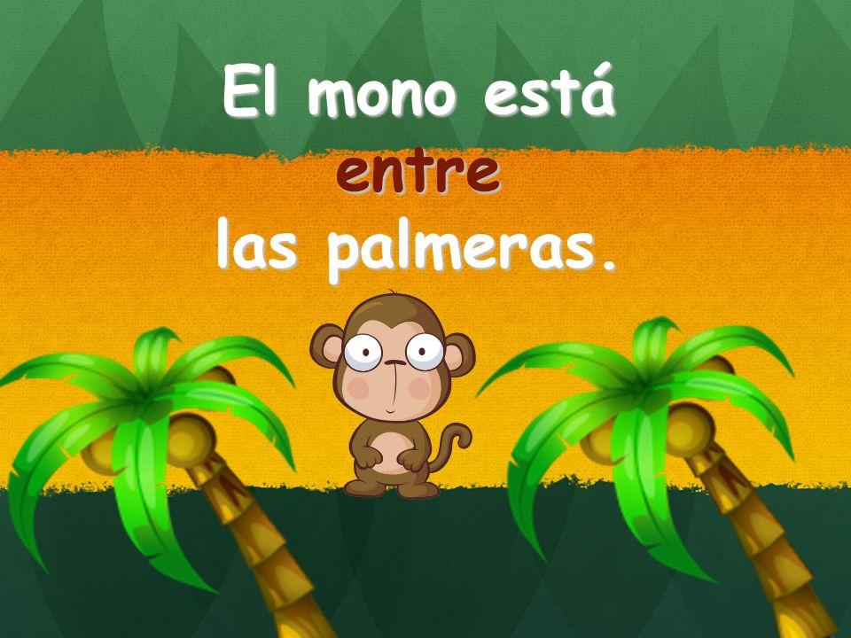 El mono está entre las palmeras. entre