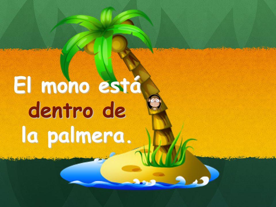 El mono está dentro de la palmera. dentro de