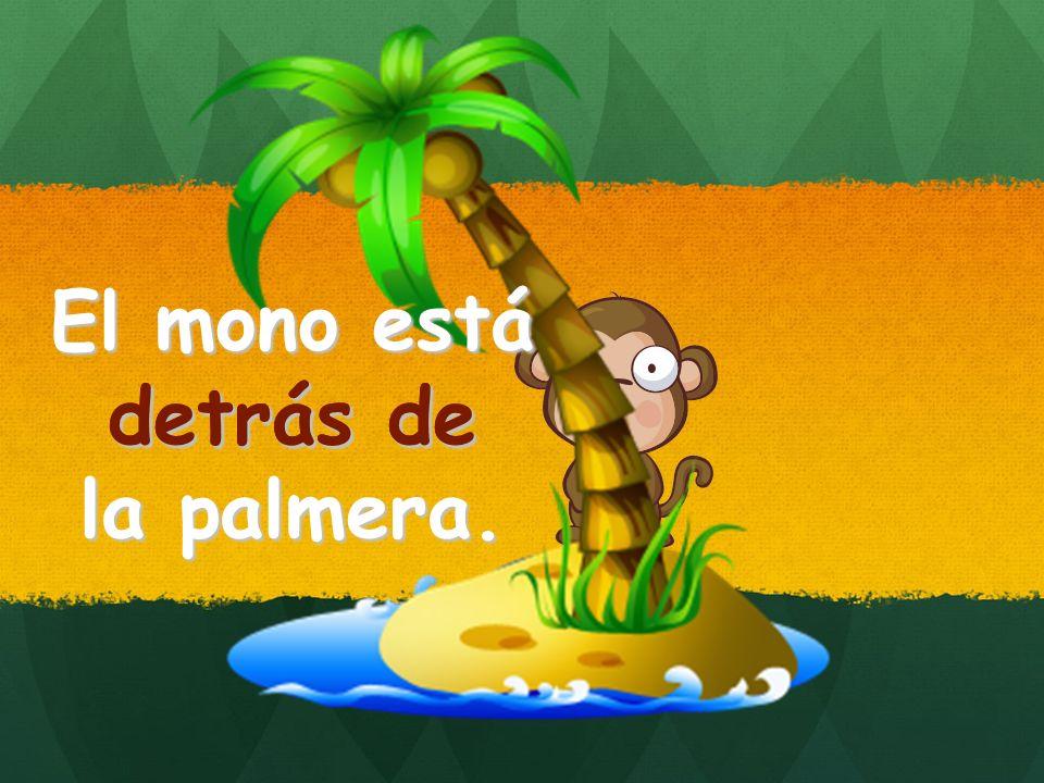 El mono está detrás de la palmera. detrás de