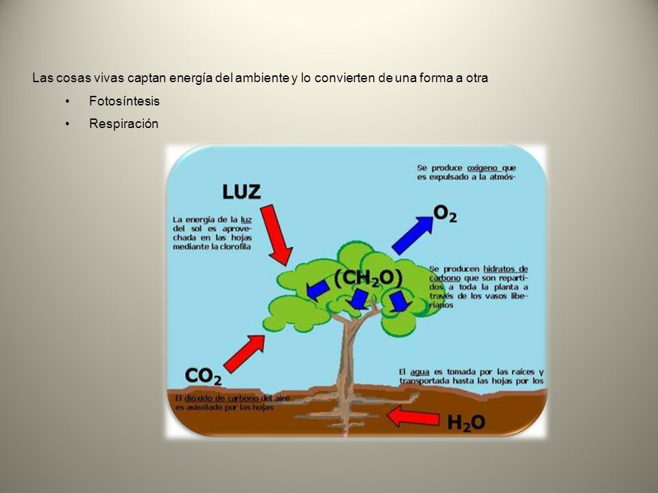 Las cosas vivas captan energía del ambiente y lo convierten de una forma a otra