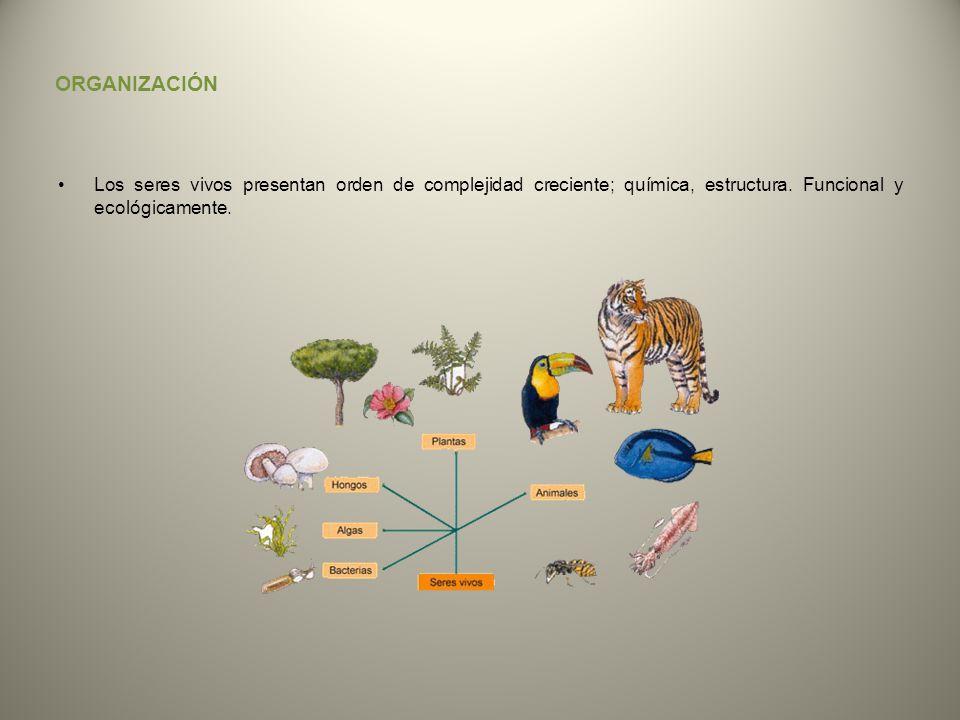 ORGANIZACIÓN Los seres vivos presentan orden de complejidad creciente; química, estructura.