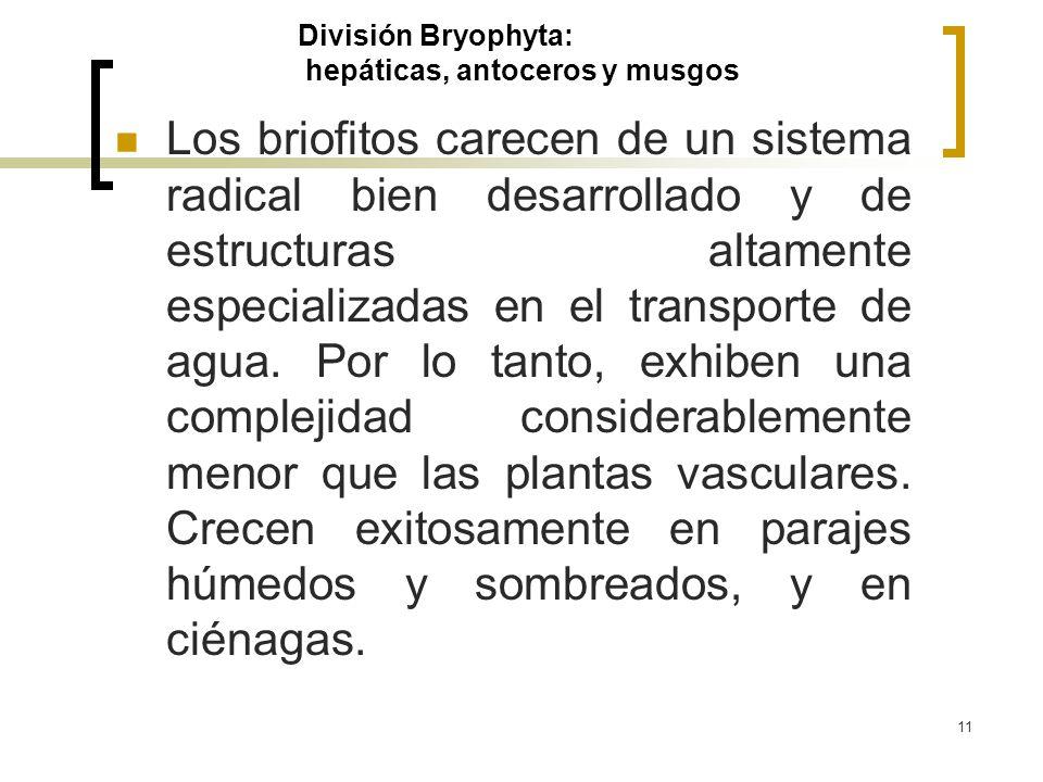 División Bryophyta: hepáticas, antoceros y musgos