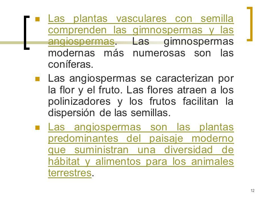 Las plantas vasculares con semilla comprenden las gimnospermas y las angiospermas. Las gimnospermas modernas más numerosas son las coníferas.