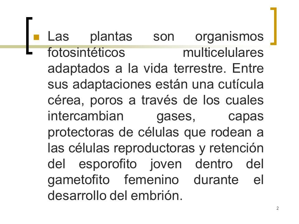 Las plantas son organismos fotosintéticos multicelulares adaptados a la vida terrestre.