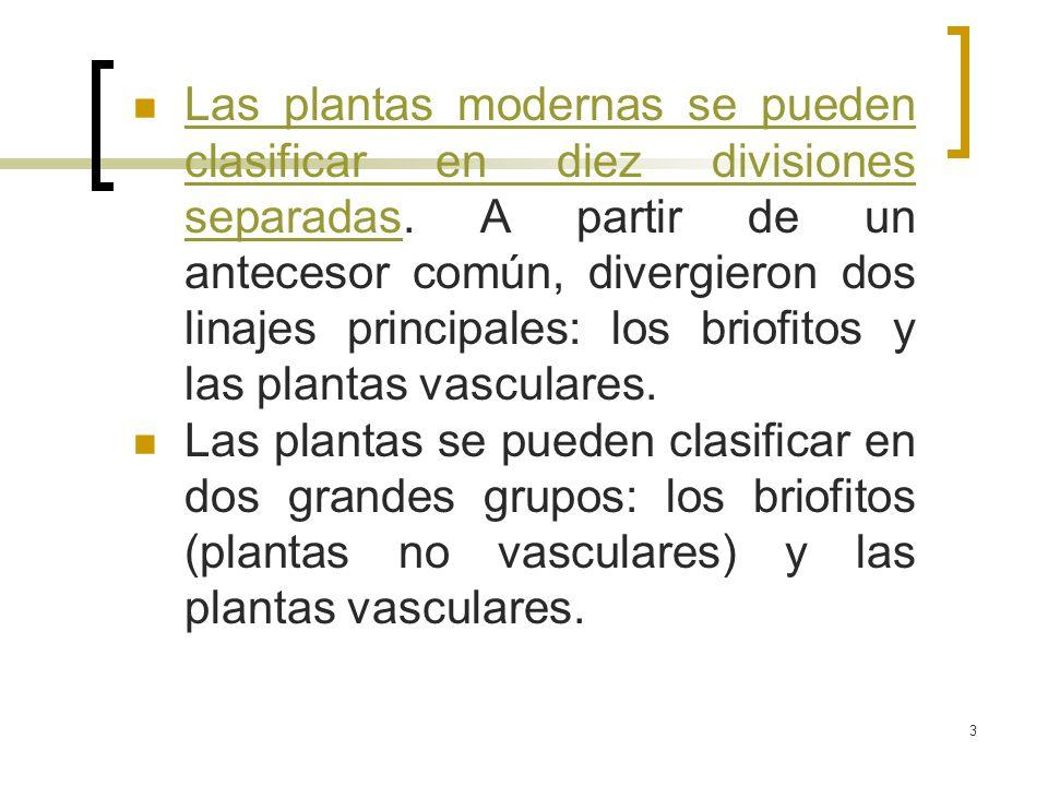 Las plantas modernas se pueden clasificar en diez divisiones separadas