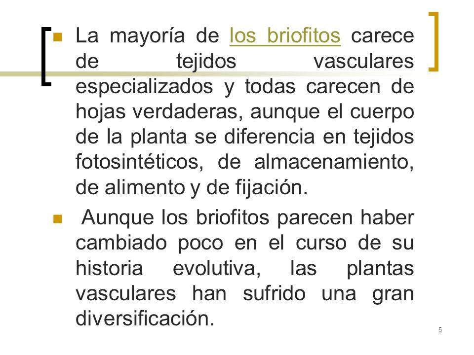 La mayoría de los briofitos carece de tejidos vasculares especializados y todas carecen de hojas verdaderas, aunque el cuerpo de la planta se diferencia en tejidos fotosintéticos, de almacenamiento, de alimento y de fijación.