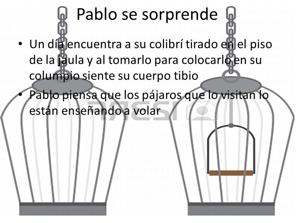 Pablo se sorprende Un día encuentra a su colibrí tirado en el piso de la jaula y al tomarlo para colocarlo en su columpio siente su cuerpo tibio.