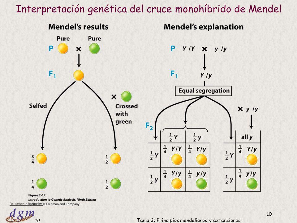 Interpretación genética del cruce monohíbrido de Mendel