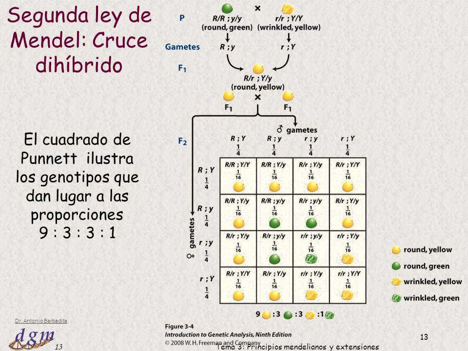 Segunda ley de Mendel: Cruce dihíbrido