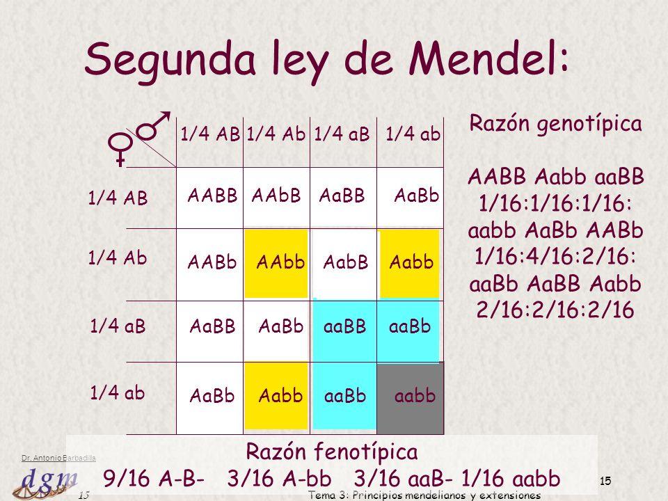 Segunda ley de Mendel: Razón genotípica AABB Aabb aaBB 1/16:1/16:1/16: