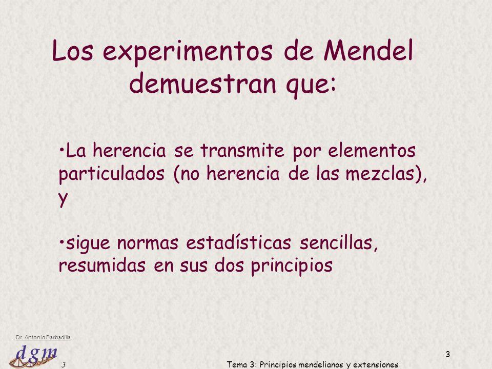 Los experimentos de Mendel demuestran que:
