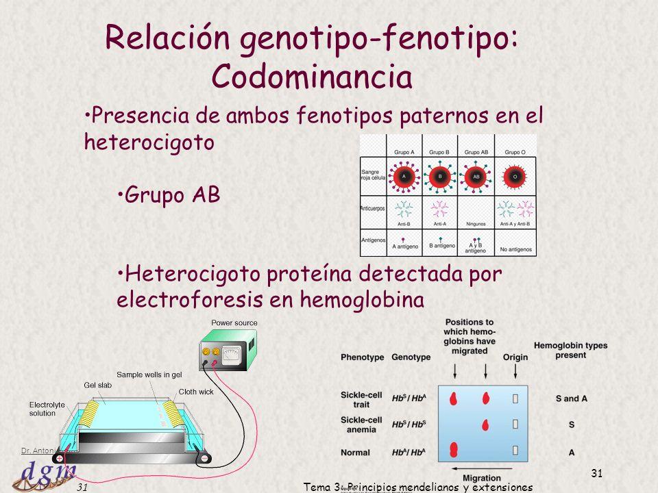 Relación genotipo-fenotipo: Codominancia