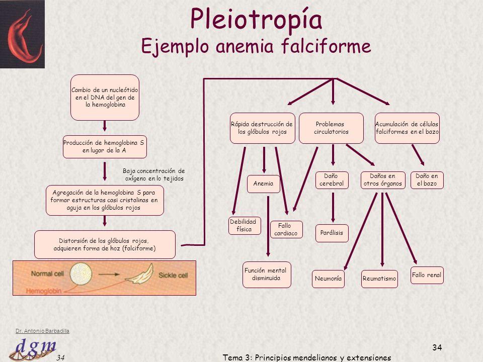 Pleiotropía Ejemplo anemia falciforme