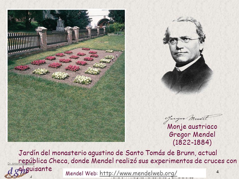 Monje austriaco Gregor Mendel (1822-1884)