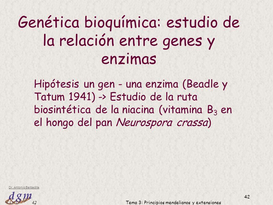 Genética bioquímica: estudio de la relación entre genes y enzimas