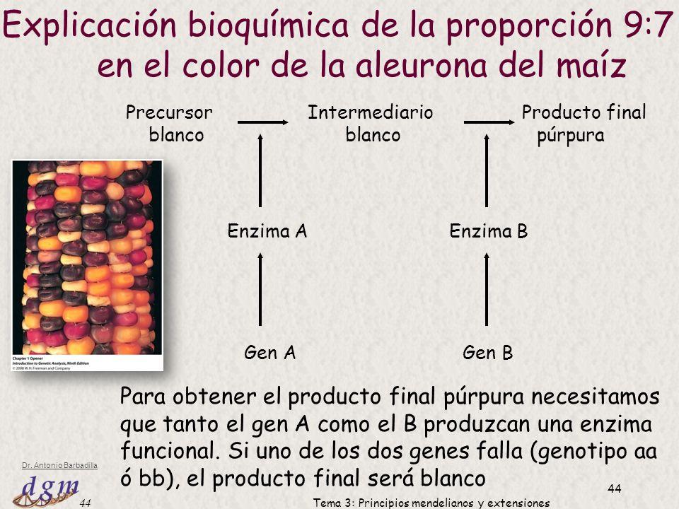 Explicación bioquímica de la proporción 9:7