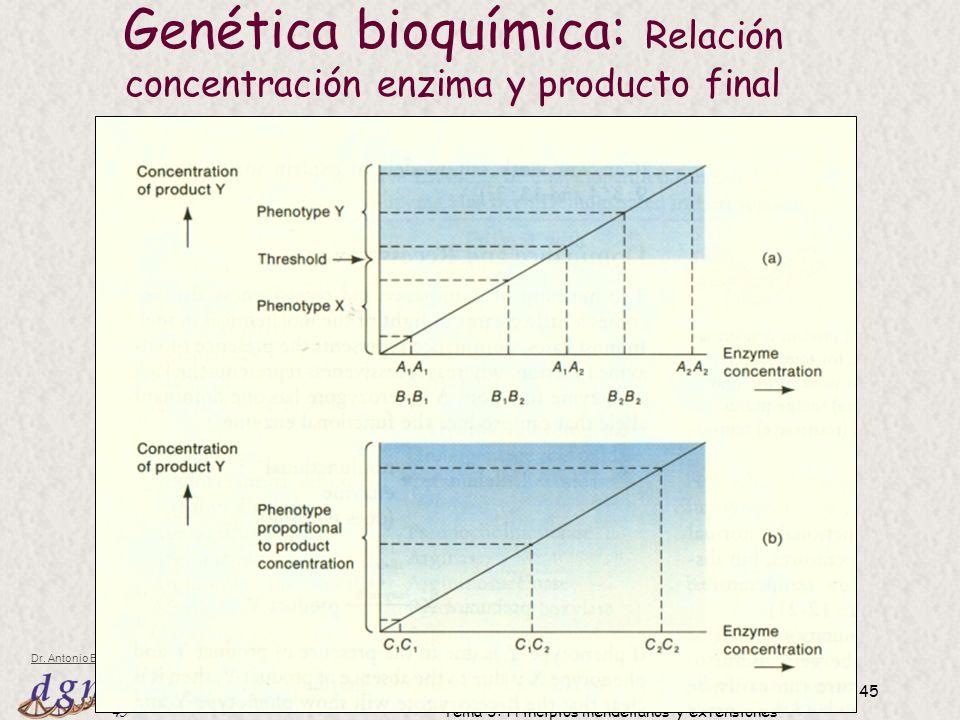 Genética bioquímica: Relación concentración enzima y producto final