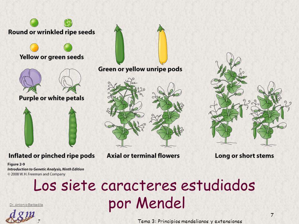 Los siete caracteres estudiados por Mendel