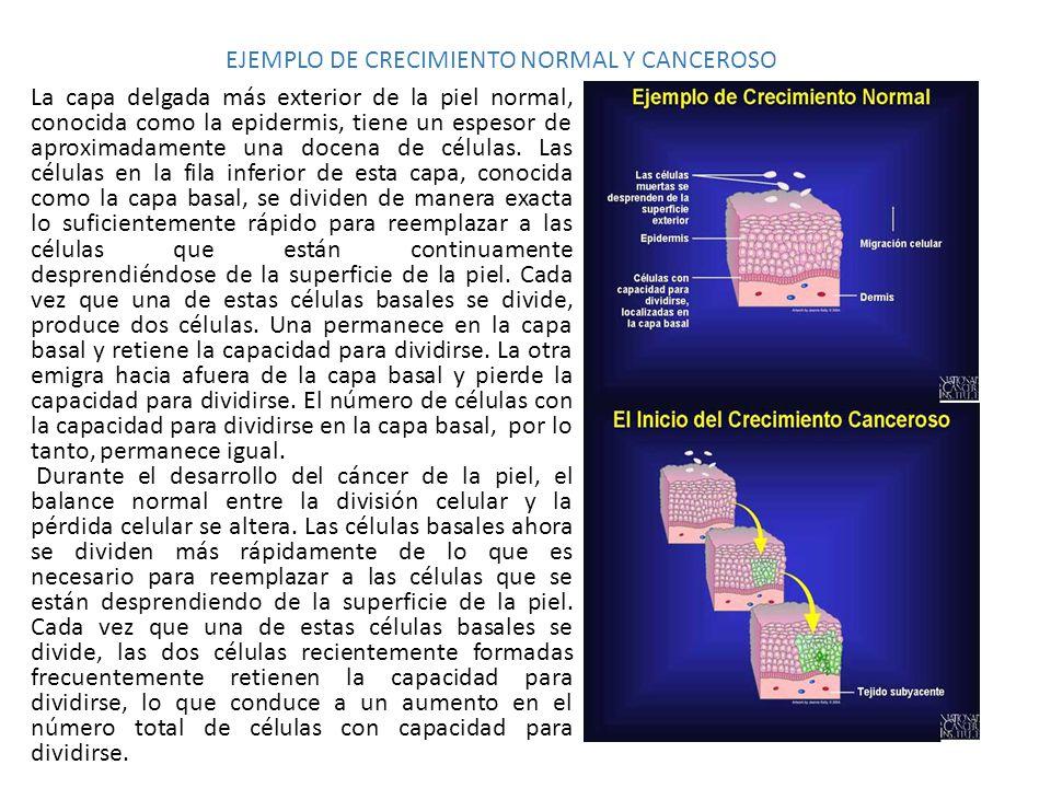 EJEMPLO DE CRECIMIENTO NORMAL Y CANCEROSO