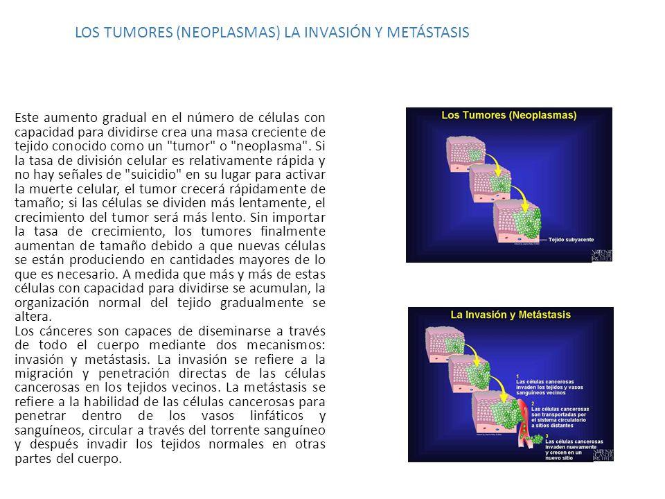 LOS TUMORES (NEOPLASMAS) LA INVASIÓN Y METÁSTASIS