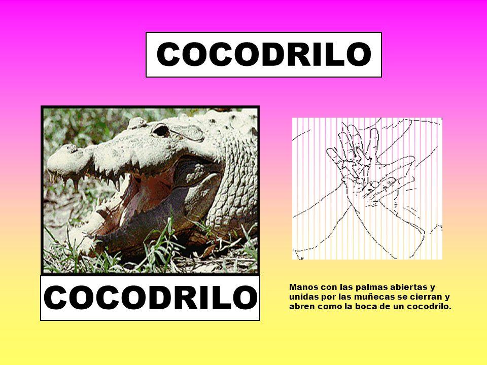COCODRILO COCODRILO.