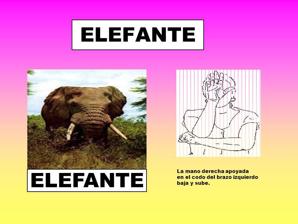ELEFANTE ELEFANTE La mano derecha apoyada