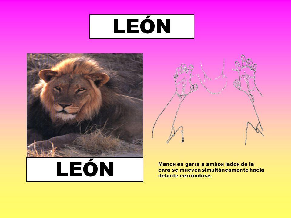 LEÓN LEÓN.