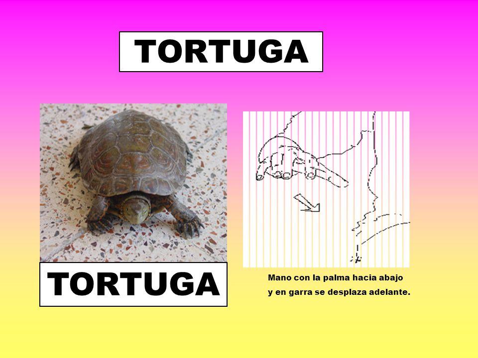 TORTUGA TORTUGA Mano con la palma hacia abajo