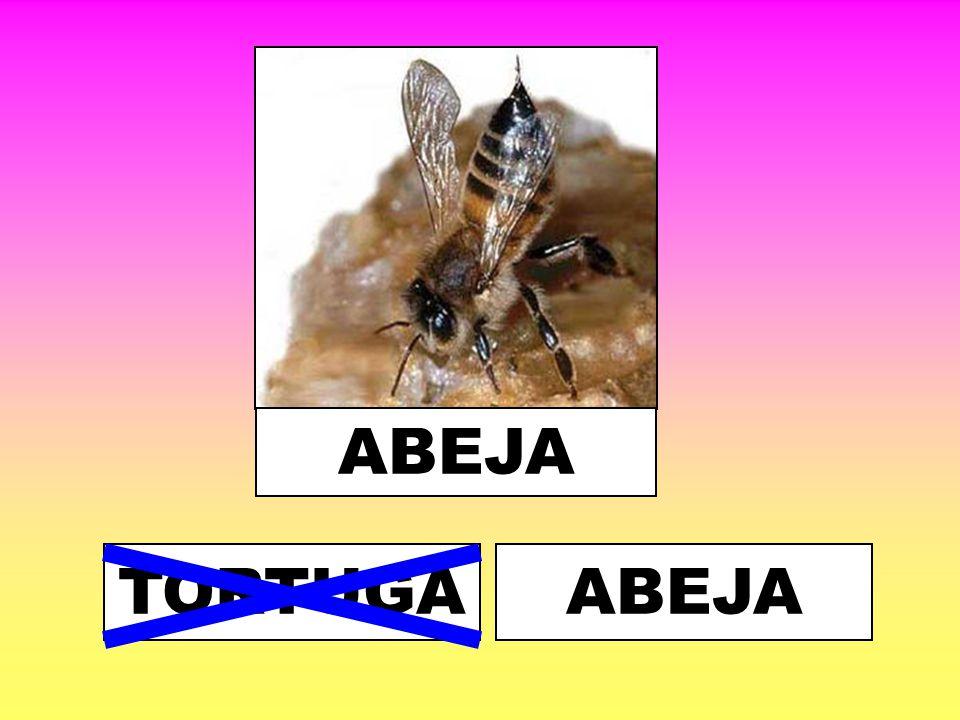 ABEJA TORTUGA ABEJA