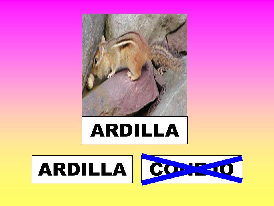 ARDILLA ARDILLA CONEJO