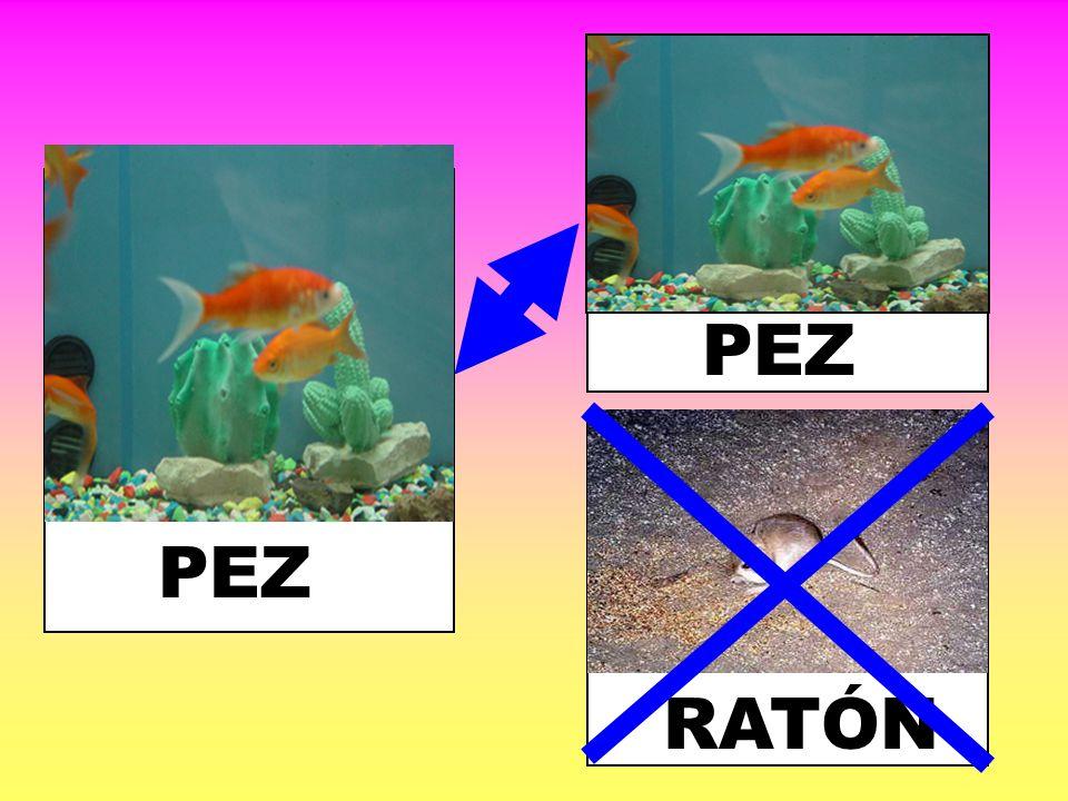 PEZ PEZ RATÓN