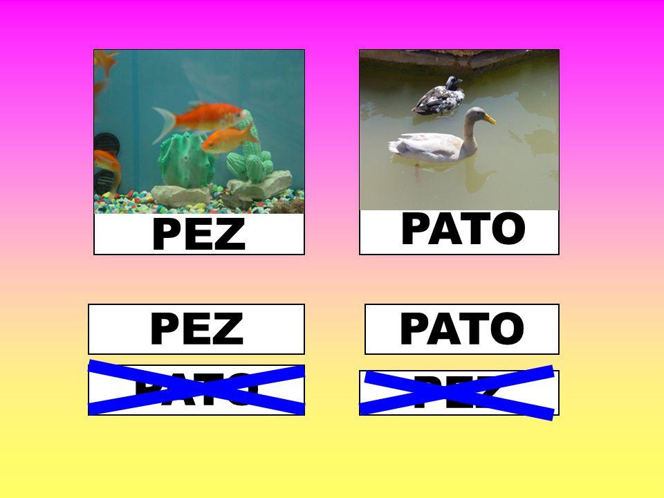 PATO PEZ PEZ PATO PATO PEZ