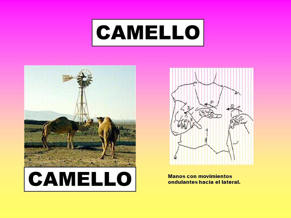 CAMELLO CAMELLO Manos con movimientos ondulantes hacia el lateral.