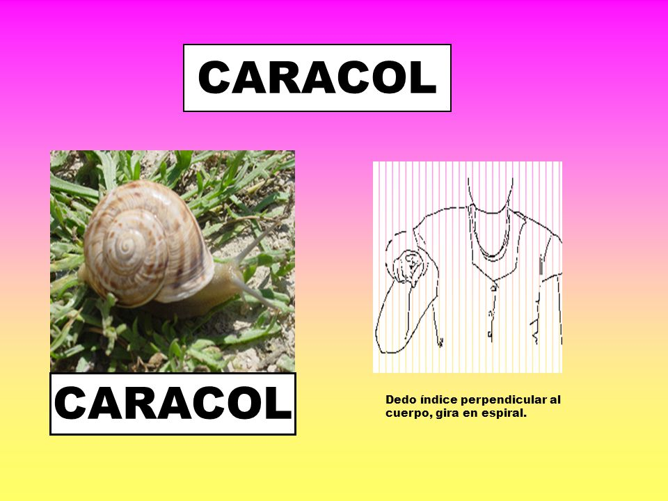 CARACOL CARACOL Dedo índice perpendicular al cuerpo, gira en espiral.